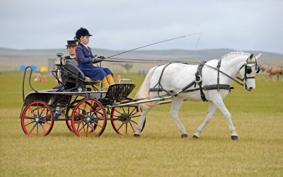 Carriage Driving comes to Aus3DE